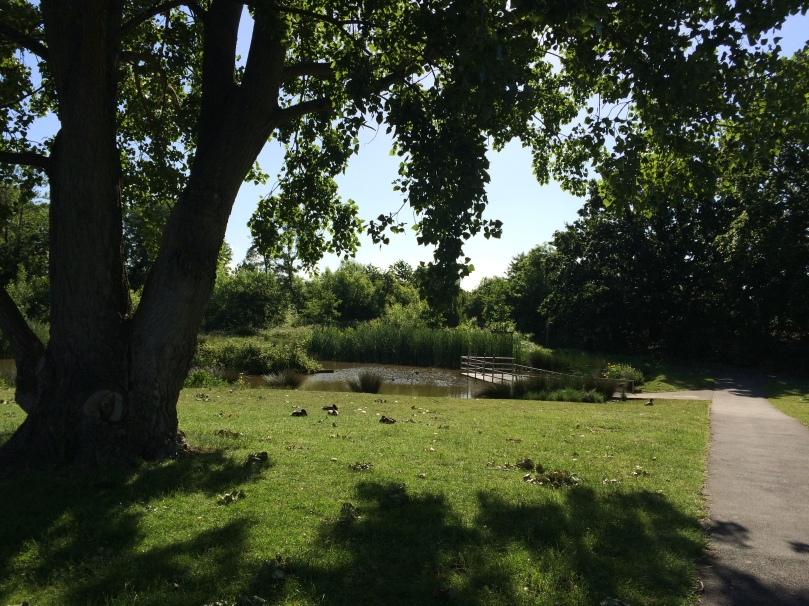 Beautiful park - sunshine, pond and ducks!